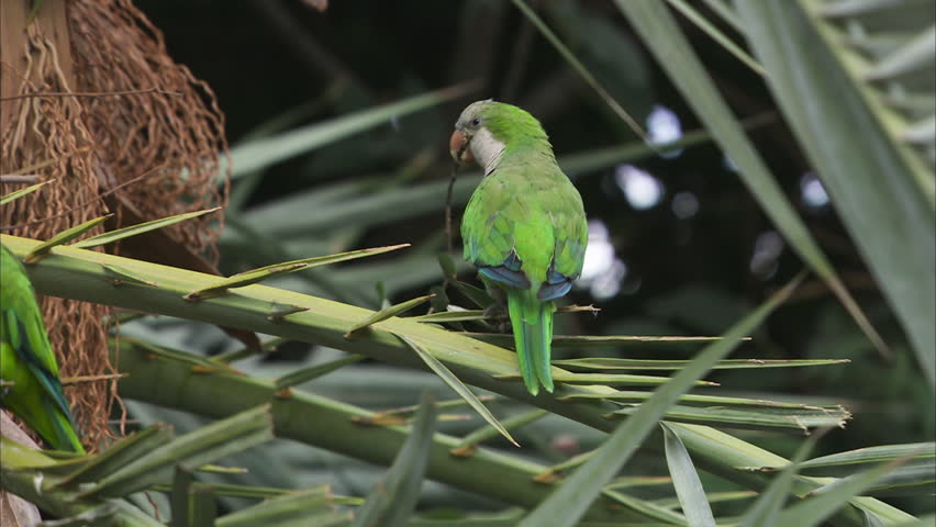 Barcelona´s Green Pigeons | Visit Barcelona With Family