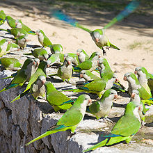 Barcelona Parrots | Visit Barcelona With Family