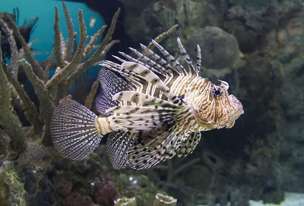 Barcelonas Aquarium